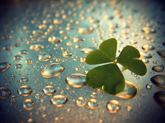 KS IT Consulting 3 leaf Clover